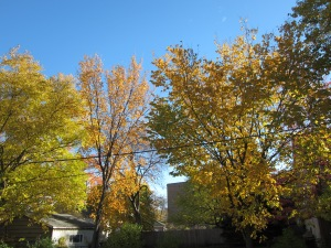 And the sky looks even bluer with the turning leaves.